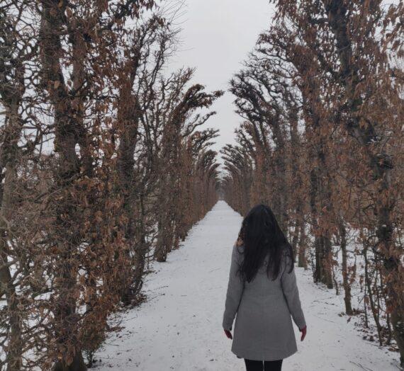 Experienta Vieneza